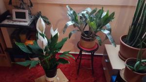 Pflanzen Zimmer