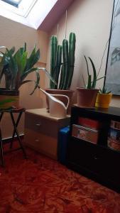 Pflanzenzimmer